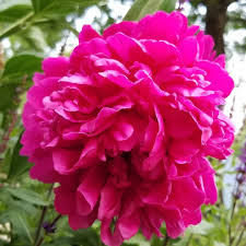 flower red #jodiesims #jodiesimsphotography #photography #photographerinoz  #photographerlover #flowerlover #jodie sims | Flower lover, Bloom, Large  flowers