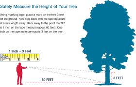 tree removal cost calculator tree cutting prices30