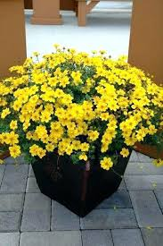 best outdoor potted plants full sun best outdoor flower pots ideas on outdoor potted plants potted