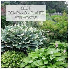 best garden plants. Best Companion Plants For Hostas \u2013 Longfield Gardens Garden