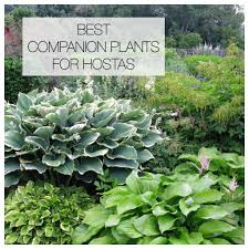 12 best companion plants for hostas