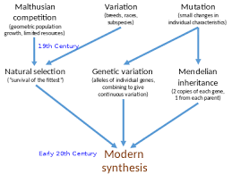 Darwin S Theory Of Evolution Chart Pearson Modern Synthesis 20th Century Wikipedia