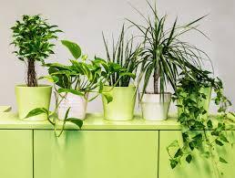 Luftreinigende Pflanzen Fürs Büro Die Top 9 Für Besseres Raumklima