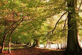 autumn forest tree nature landscape trees fall wallpaper hd for android mobile free