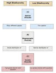 Species Diversity Definition Definition Of Biodiversity