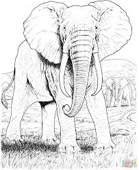 Small Picture Free Printable Elephant Coloring Pages For Kids With esonme