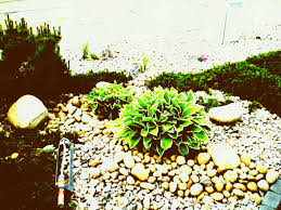low maintenance front garden design best of nz ideas i for small gardens trends alluring exterior