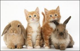 kittens and puppies and bunnies and hamsters.  Hamsters Kittens And Puppies Bunnies Intended Hamsters T