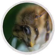 Honeybee Closeup #3 Photograph by Aubrey Moat