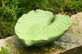 you don t have to pay a lot for a one of a kind bird bath look for plants with large leaves to add to your garden then turn one of those big beauties into