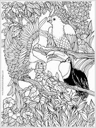 Coloring Pages Parrots Bird Adult Free Coloring Pages Realistic