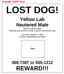 Lost Pet Flyer Maker 100 Images of Lost Dog Template For Word tonibest 73