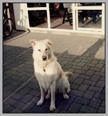 ᐅ Trauer Um Den Hund Hunde Und Ihre Welt