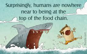 tundra food chain