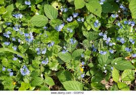 Small Picture Wild Flowers Garden Uk Stock Photos Wild Flowers Garden Uk Stock