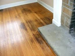pet proof rugs solutions for resistant urine flooring dog wood whats the best dogs gathered