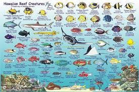 Oahu Fish Chart Kauai Reef Fish Guide In 2019 Coral Reef Animals Hawaiian
