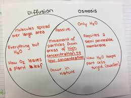 Venn Diagram Of Diffusion Osmosis And Active Transport Venn Diagram For Osmosis And Diffusion Magdalene Project Org