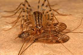 Small Black Flies In Kitchen House Centipedes On The Move Whats Bugging You