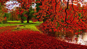 fall nature backgrounds. Free Fall Wallpapers For Desktop. Nature Backgrounds