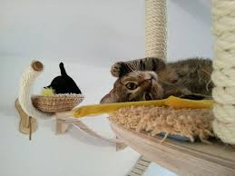 all cats love to rest without exception in a safe in their opinion shelters in closets shelves with laundry and other secluded places furniture with cat safe furniture