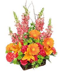 st johns flower market