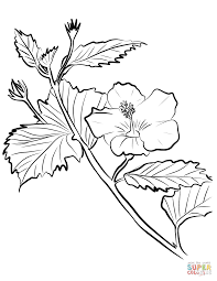 Hibiscus coloring pages | Free Coloring Pages