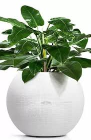 office pot plants. Puro Plant Container In White Office Pot Plants N