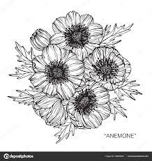 アネモネの花を描くと白い背景の線画でスケッチ ストックベクター