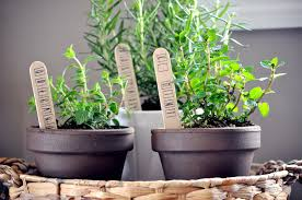 Kitchen Herb Garden Indoor A Grown Up Smart Countertop Herb Garden Garden Design Garden