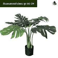 ต้นมอนสเตอร่าปลอม สูง 80 CM - pimarn