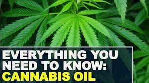 Image result for pictures of cannabis oil