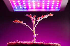 Lights Of America 24 Inch Grow Light Grow Lights For Indoor Plants And Indoor Gardening An