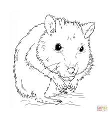 Small Picture Dwarf Hamster coloring page Free Printable Coloring Pages