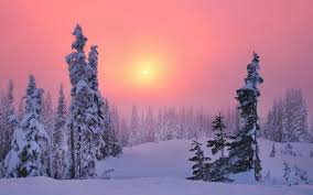 pink winter background. Contemporary Pink Pink Winter  Sun Background Snowy Firs Fog Afternoon Sundown With Background I