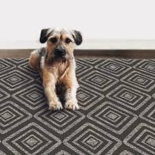 the best washable rugs according to pet owners and pas