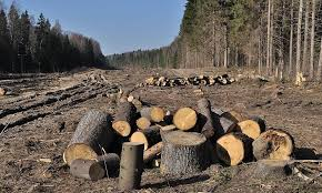 FOTO) Defrișările din Apuseni, văzute din satelit! 1984, 1995 și până în 2017: Câtă pădure s-a tăiat? - Apuseni Info