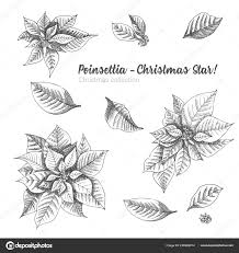 Set Hand Drawn Sketch Christmas Poinsettia Flowers Vintage