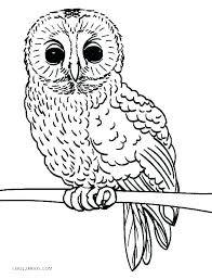 Owls Coloring Pages Free Owl Picture To Color Chronicles Network