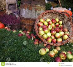 green and red apples in basket. royalty-free stock photo. download autumn decoration, wooden barrel, red and green apples in a wicker basket on r