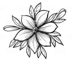 графический рисунок лилия ветвь с листьями и рецепторы цветов
