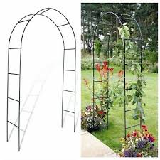 garden arch rose plant climbing trellis