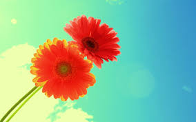 hd photos flowers. Wonderful Photos 2931 Download 6834 Views Sun Flower HD Image For Hd Photos Flowers W