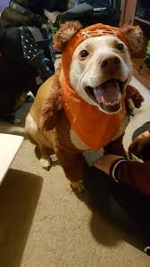 i just got an ewok costume for my dog