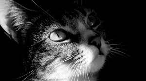 24 Cute Black and White Wallpapers ...