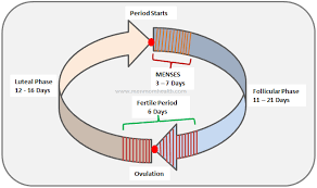 Ovulation Calculator To Know When You Ovulate Ovulation
