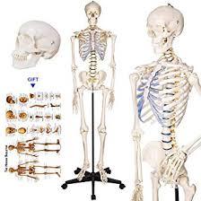 Human Bone Chart