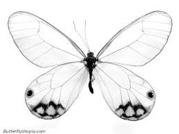 Butterfly Coloring Pages, Butterfly Crafts, Page, Drawings ...