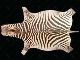 fancy zebra skin rug animal skin area rugs zebra cowhide zebra skin rug zebra skin rugs