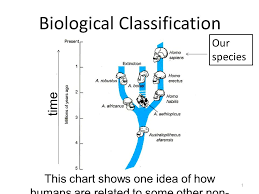 Biological Classification Chart Biological Classification 1 This Chart Shows One Idea Of How